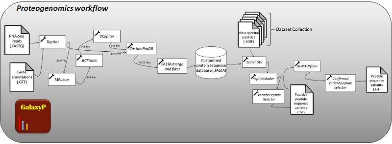 Proteogenomics workflow